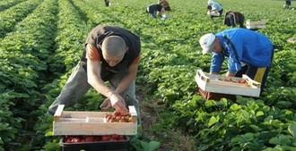 Strawberry fields для «middle class»