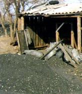 «Дикие» шахты в Снежном (+видео)