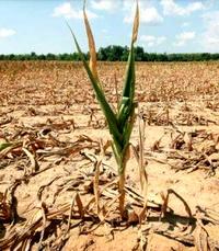 Экология и «аграрная сверхдержава»
