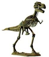Как неравенство уничтожает динозавров