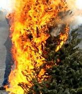 Ёлки горят