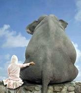 Как мы слонов освобождали