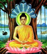 «Буддистская сила»